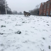Snow - Russell Park