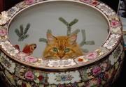 Ginger Playing Hide 'n' Seek