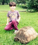 Kris and Mussolini's tortoise