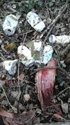 Müllsammmeltag 19.3.2016
