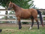 Standardbreds Horse Lovers