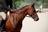 Equestrians in Ontario!