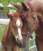 a bond with a horse and …