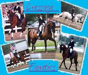 DRESSAGE FANATICS!!!