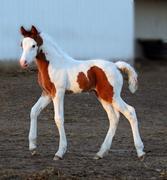 We Love Foals