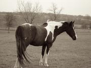 Heart for Horses