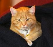 Barn Cat Admiration Society