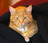 Barn Cat Admiration Soci…