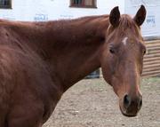 Rescue horses