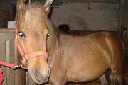 Yes, I kiss my horse