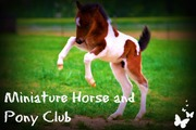 Miniature Horse and Pony Club