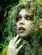 The Magick Grove