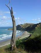 Gisborne NZ