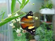 Auckland Biodynamic/Organic Garden Group