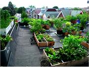 City Rooftop Food Gardens