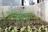 Organic Gardening For Be…