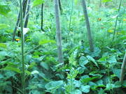 Earth Gardens: Edible-Medicinal-Wild Habitats (Permaculture Network)