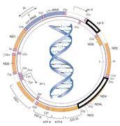 Haplogroup U