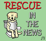 RESCUE IN THE NEWS