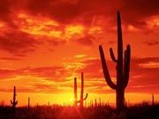 Arizona Aestheticians