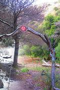 CREST13 Aldea Jardin Tiempo de Brotar (Argentina)