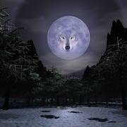 wolf57