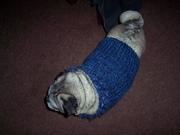 Short Blue doggie sweater