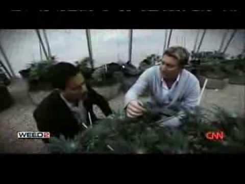 Weed 2: Cannabis Madness ~ Dr  Sanjay Gupta Reports