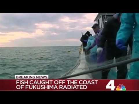 Fish Dangerously Radioactive from Fukushima  Will Reach USA in Weeks [NBC]