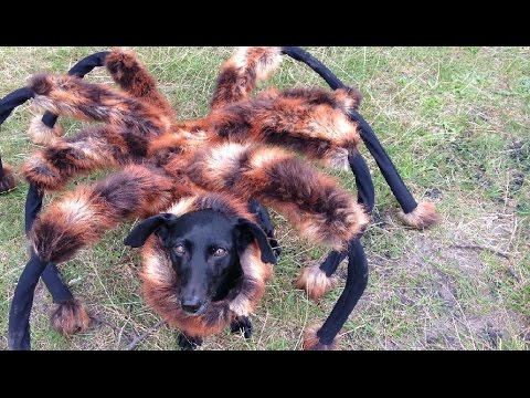 Watch As People Flee In Terror From The Giant Mutant Spider Dog