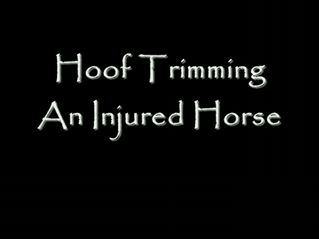 Hoof Trimming the Injured Horse
