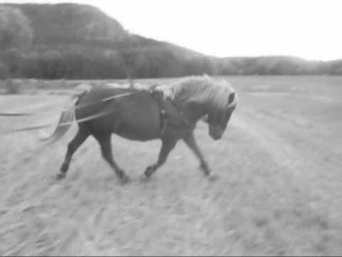 Ponydancing