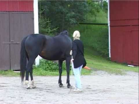 Natural Horsemanship the Parelli way!!!!!! - the alternative!