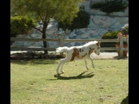 The Mini Horse Song!