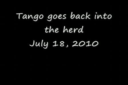 tango goes to pasture