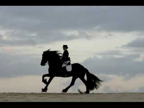 Stunning Photography - Friesians/Dressage/Beach