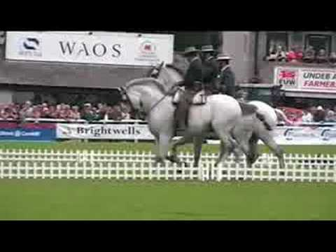 A Beautiful Quadrille of Spanish Horses in Slow Motion