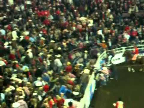 Bull Jumps Into Crowd At Edmonton Rodeo
