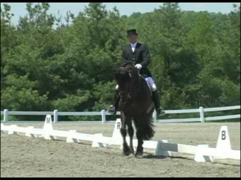 Steeped in Luck, Registered Irish Draught Stallion & Tom Dvorak