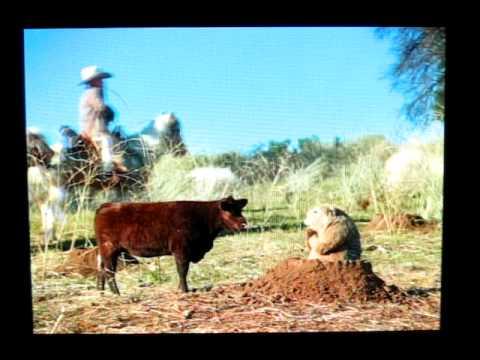 Mini Horses, Mini Cowboys, and Mini Cows