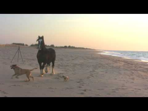 Horse and Dogs Having Fun at the Beach!
