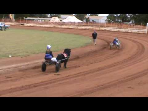 Australian Mini Horse Trotter Championship