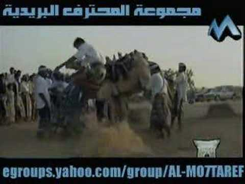 So You Jump Horses?Try Camels