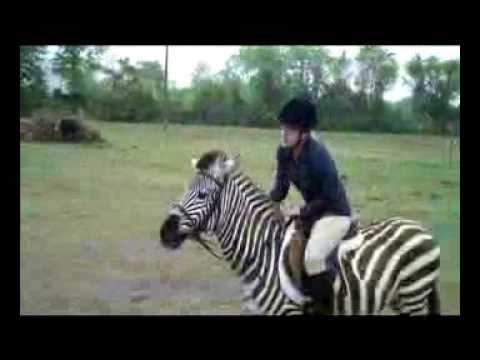 Jumping Zebra:  Zack the Zebra