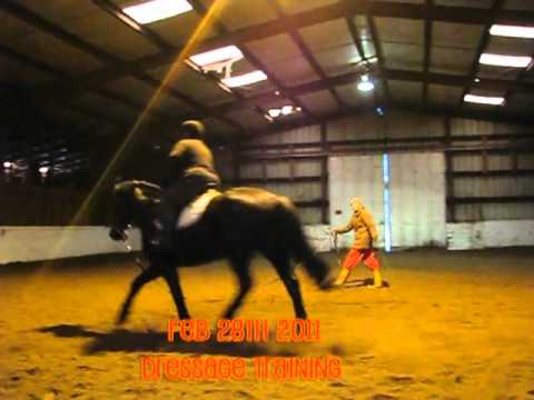 Dressage Retraining Feb 28th 2011