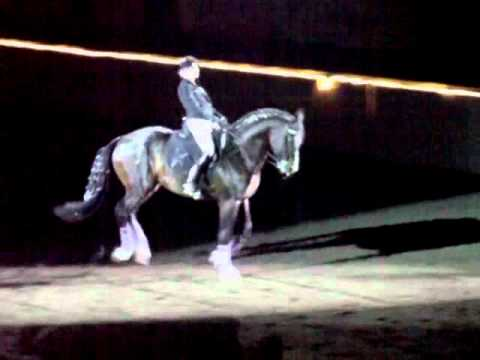 """Now This is a """"Dressage Queen""""!"""