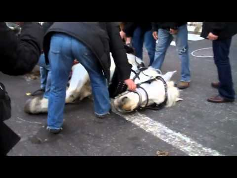 In the News Today: NYC Carriage Horse in the Street