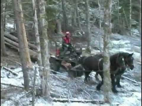 Extreme Logging With Horses in Rough Terrain