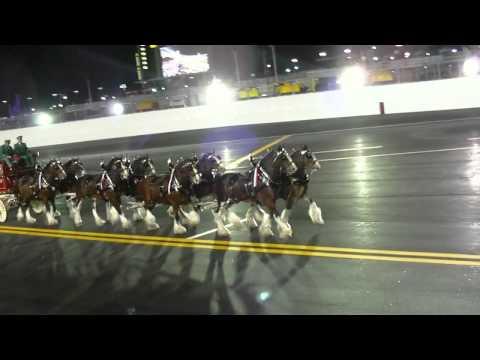 Budweiser Clydesdale Horses At  Daytona International Speedway