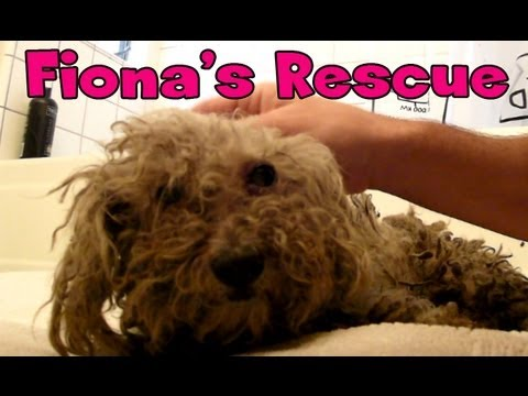Fiona the Blind Dog: Amazing Rescue Story Has Gone Viral!